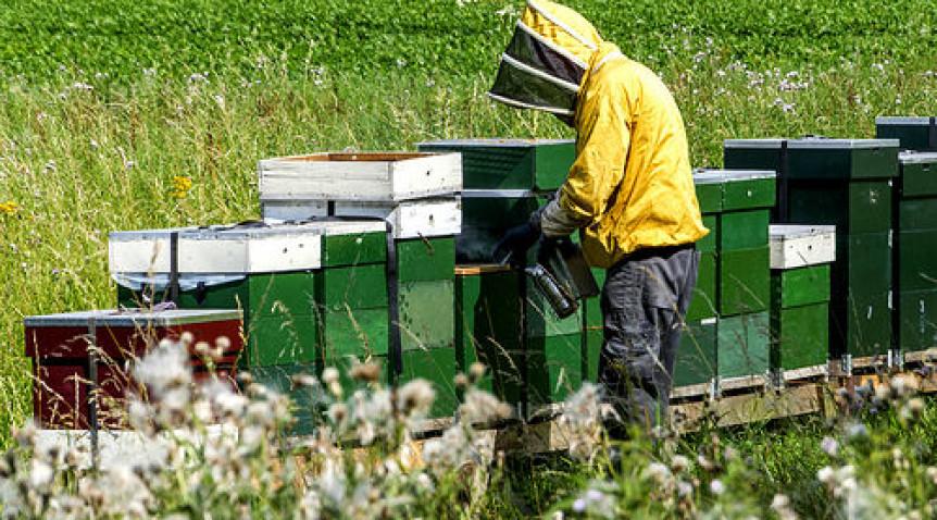 L'apiculture et les produits de la ruche cartonnent